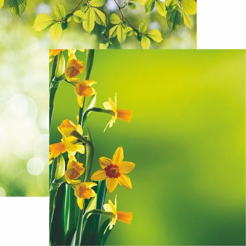 Hello Spring: Daffodils Scrapbook Paper