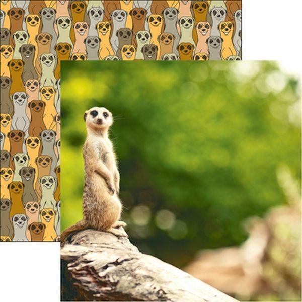 King of the Jungle: Meerkat Paper