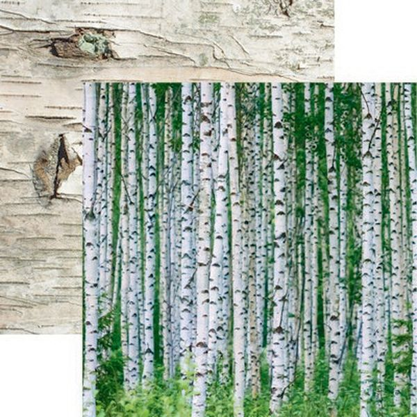 Scandinavian Woodland: Birch Wood Paper